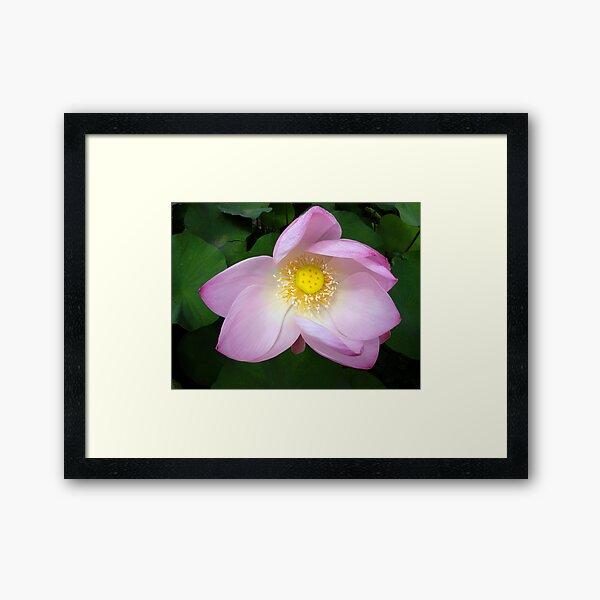 The Beguiling Lotus... Framed Art Print