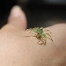Posing Money Spider by Cathie Trimble
