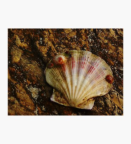 Mother Shell with Baby Shells Photographic Print