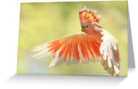 Colours Of Australia by Trudi's Images