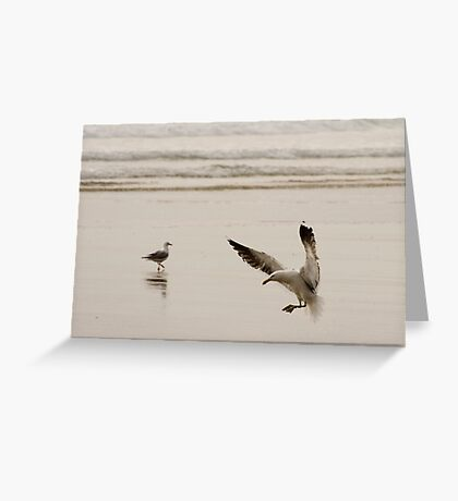 Coming in to land - seagull Baylys Beach NZ Greeting Card