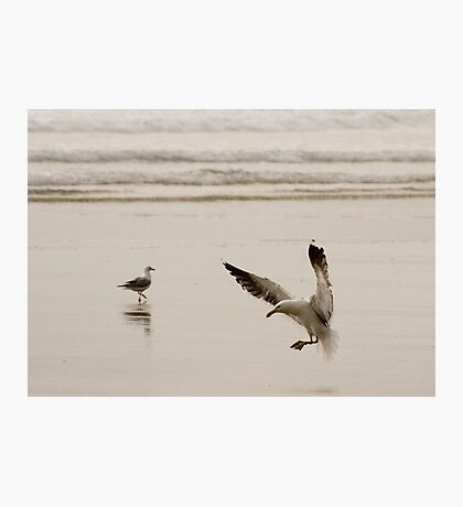 Coming in to land - seagull Baylys Beach NZ Photographic Print