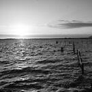 Lake Tooliorook Lismore vic by trishringe