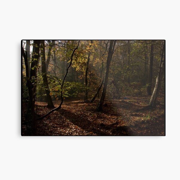 Autumn sunlight - Boarshole Woods Metal Print