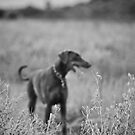 Outstanding In Your Field by { wetnosefotos.com  }