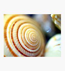 Shell Photographic Print