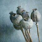 PoppyLove ... by BertaDrost