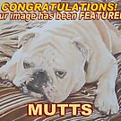 Mutts Feature Banner by FranEvans