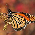 Fall Colors by Renee Blake
