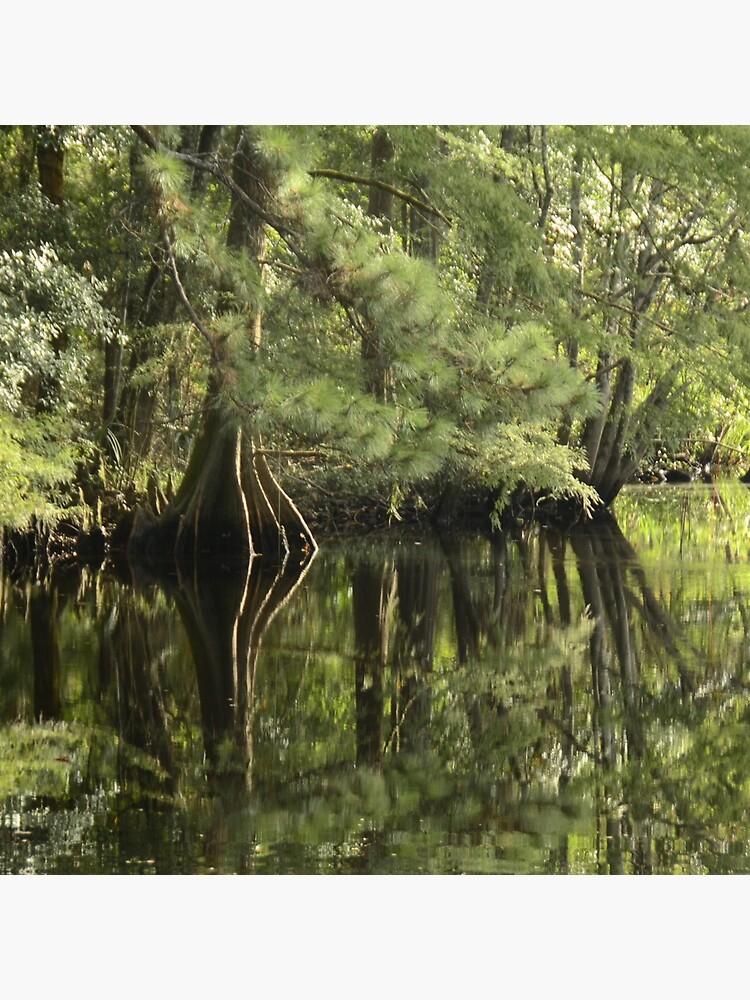 down on the bayou by bsteveb