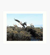 Galapagos Islands Art Print