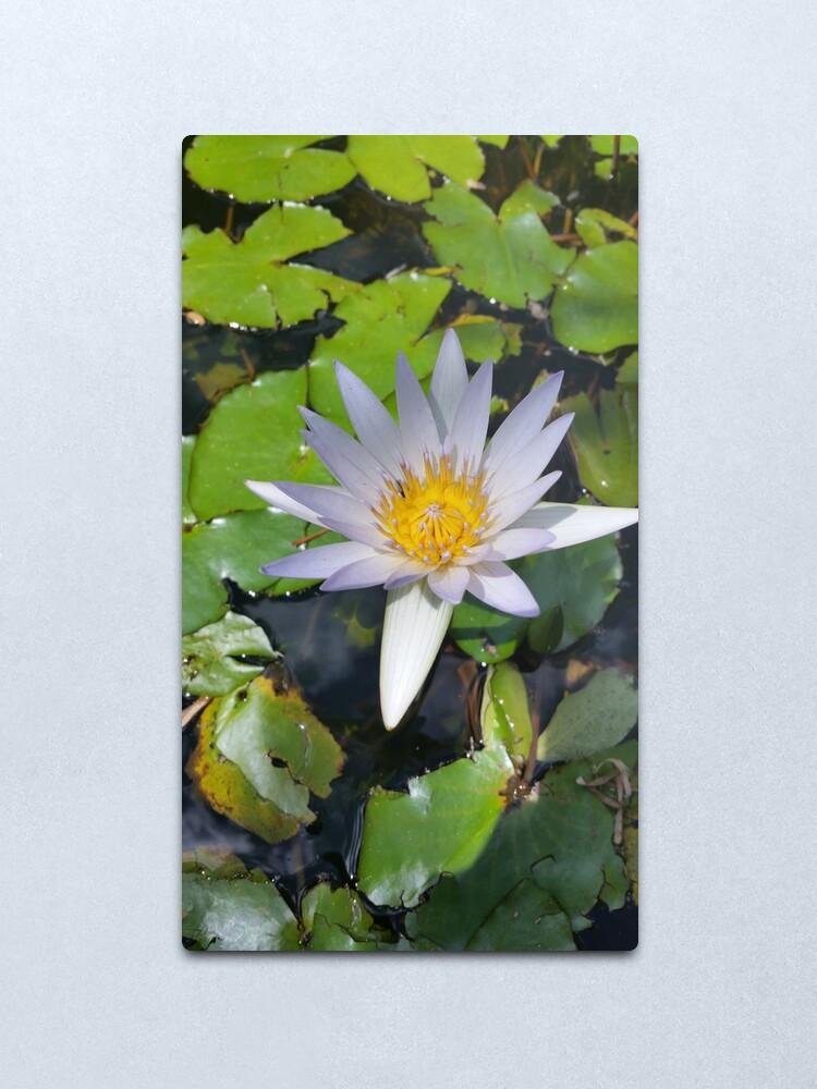 Alternate view of The lotus flower Metal Print