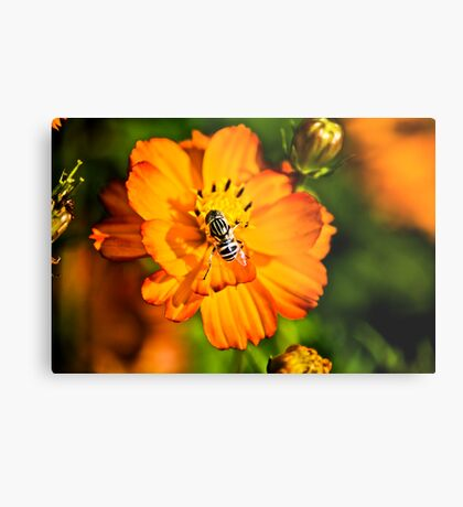 Smell flower a day... Metal Print