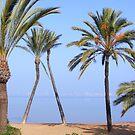 Palms in love by LadyE