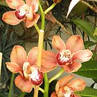 Butterscotch Orchids by BarbBarcikKeith