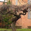 Swirly tree by Maria1606