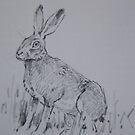 Hare Study field sketch by leunig