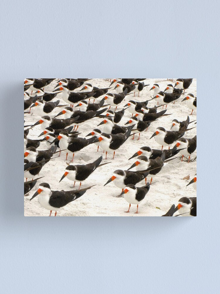 Alternate view of Black Skimmers in a Row Canvas Print