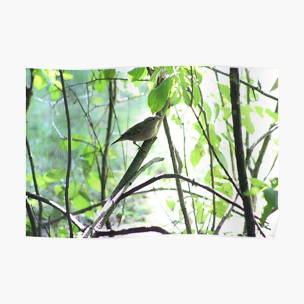 Adorable Birds Poster