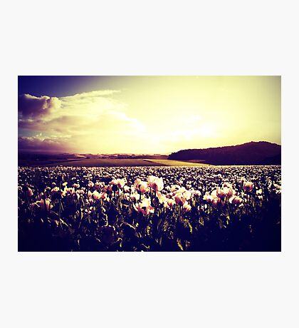 There are more things in heaven and earth, Horatio Photographic Print