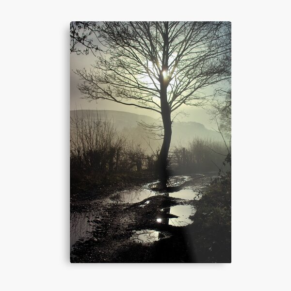 The Roots in the Sky Metal Print