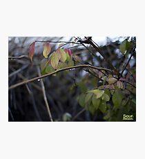 Colors of rain Photographic Print
