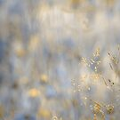 herbal dreamland in gold by Aimelle