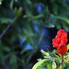 Pomegranate Blossom by CallinoisArt