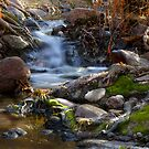 Forest Creek by Sue  Cullumber