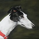 Black and White Greyhound by Charlotte Yealey