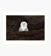 My What A Big Nest You Have / Snowy Owl Art Print