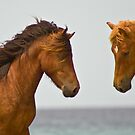 """""""Horse Play"""" - wild horses face off on the beach by ArtThatSmiles"""