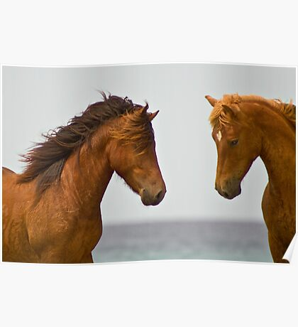 """""""Horse Play"""" - wild horses face off on the beach Poster"""