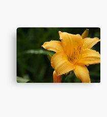 yellow nature 2 - botanic gardens Canvas Print