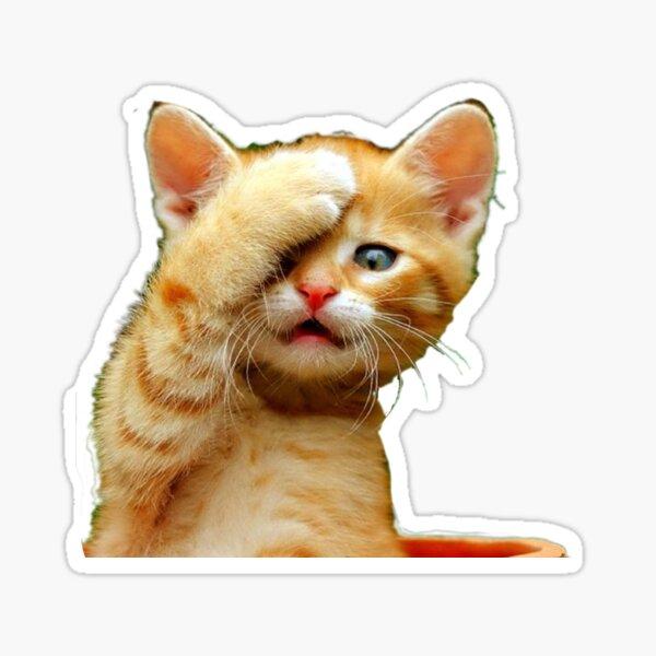 Orange Kitten // HD Picture  Sticker