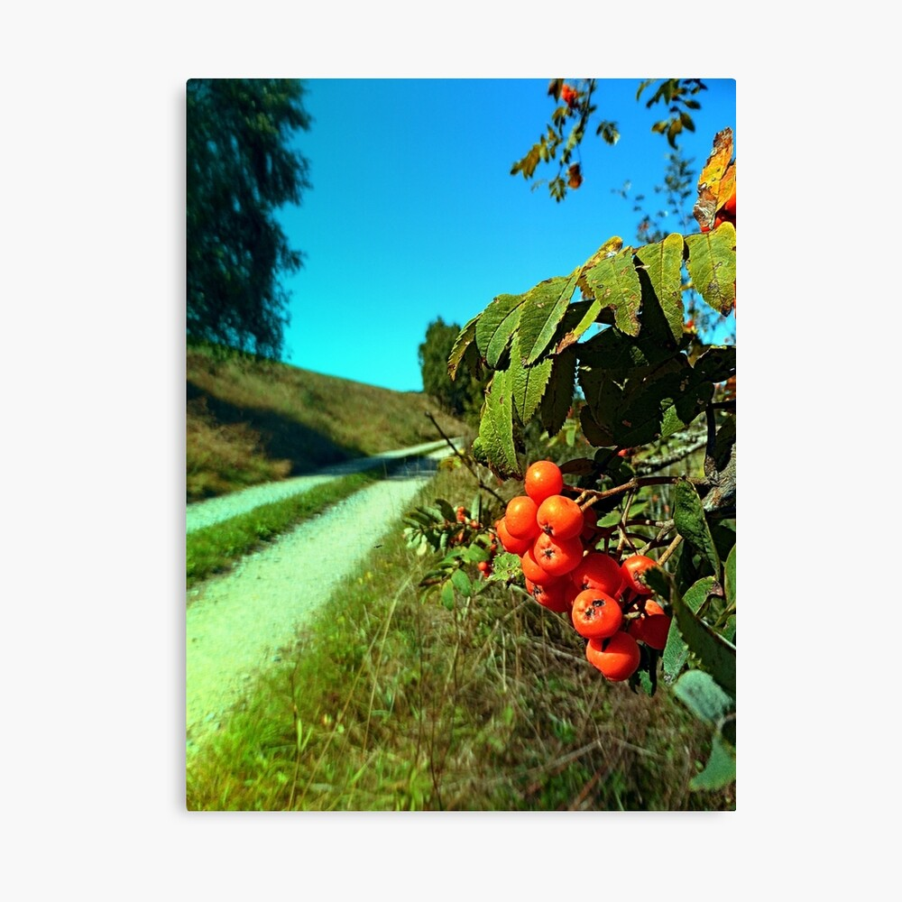 Some berries and a hiking trail Canvas Print