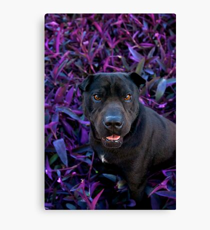 Wrinkles On Purple Canvas Print