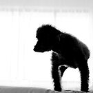 Zack In Silhouette by { wetnosefotos.com  }