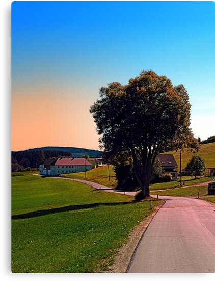 A tree, a road and summertime by Patrick Jobst