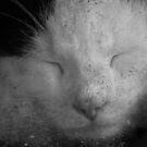Dreamworld Of Kitty ~ Tikka ~ by Sandra Cockayne