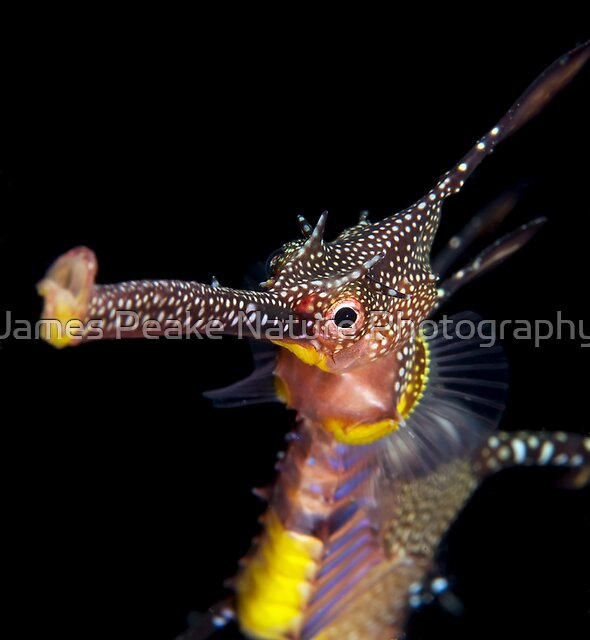 Long Face. by James Peake Nature Photography.