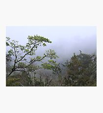 Cloud Forest Photographic Print