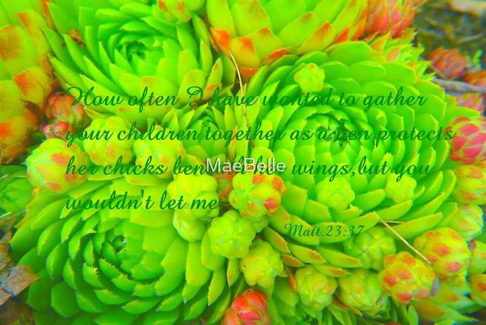 Hen and Chicks..Matt 23:37 by MaeBelle