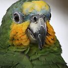 Parrot Face by ChromaticTouch