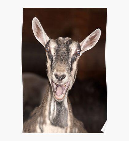 """I'm Baaaad"" - goat has goofy expression Poster"