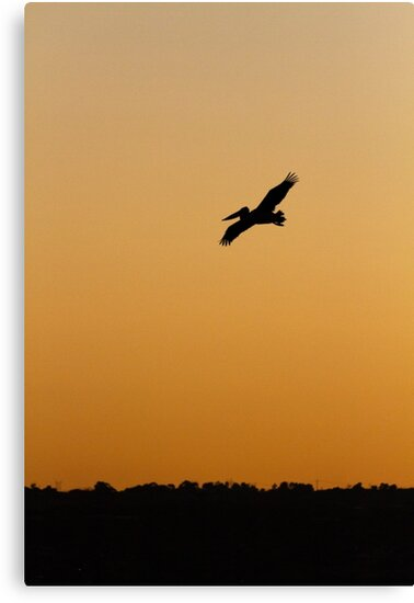 Pelican by Whitepointer