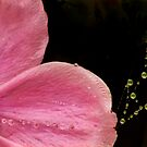 After the raindrops fell by DIANE  FIFIELD