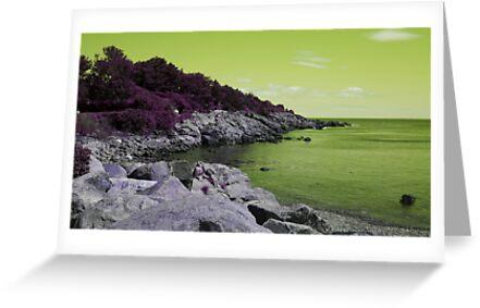Lime Coastal Maine by Christy  Bruna