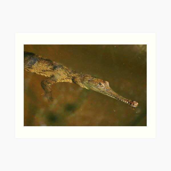 Fresh Water Crocodile Art Print