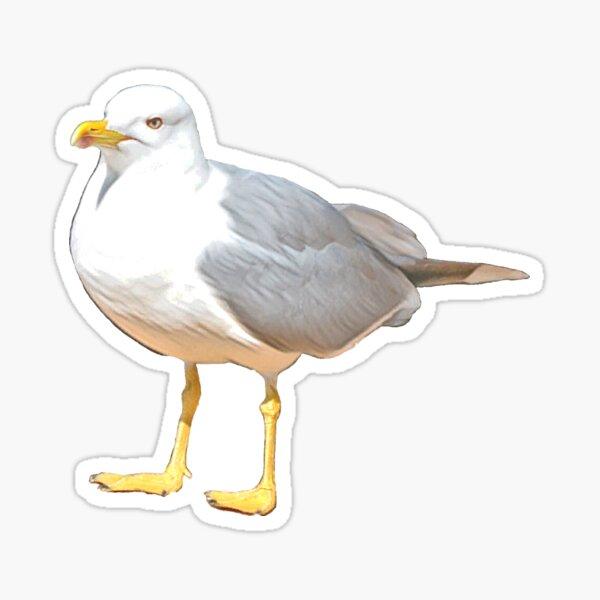 Gull suspicious Glossy Sticker